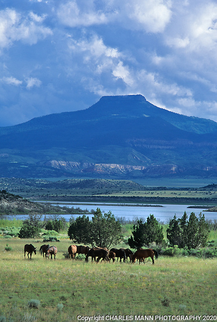 Horses graze in front of the lake near Ghost Ranch in Abiquiu, New Mexico, where the  towering form of Cerro Pedernal, often depicted by Georgia O'Keefe, overlooks the  landscape.