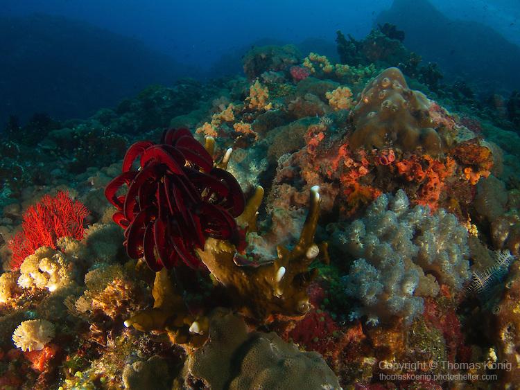 Da Xia Gu ('Grand Canyon'), Green Island -- Colorful underwater landscape.