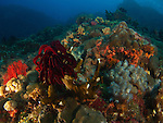 Da Xia Gu ('Grand Canyon'), Green Island -- Colorful underwater landscape.