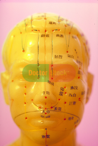 model of human head with acupuncture needle guide