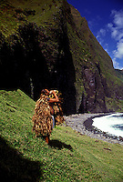 Man wearing traditional Hawaiian raincoat blowing conch shell at the mouth of Waikolu Valley, on the island of Molokai, Hawaii.