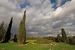 """Israel, the Shephelah. Cypress trees at the site of the """"Tombs of the Macabees"""""""