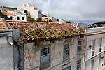 House leeks on tiled roof,Valverde, El Hierro, Canary Islands.