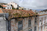 House leeks on tiled roof,Valverde, El Hierro, Canary Islands.