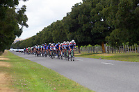 Stage three of the NZ Cycle Classic UCI Oceania Tour (Martinborough circuit) in Wairarapa, New Zealand on Friday, 17 January 2020. Photo: Dave Lintott / lintottphoto.co.nz
