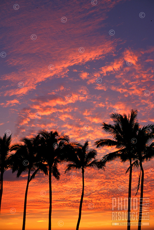 Palm trees with beautiful sunset in background