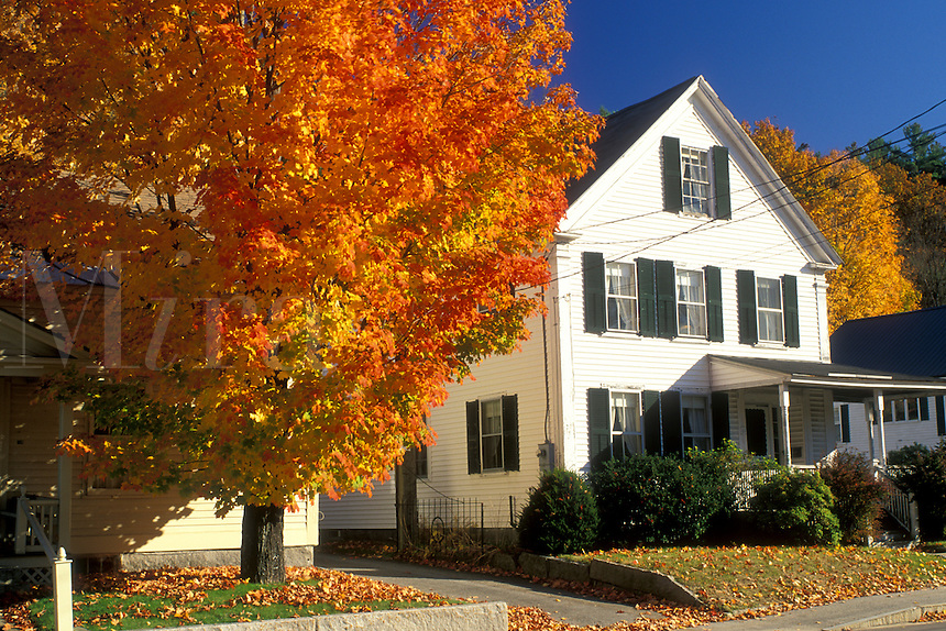 maple tree, neighborhood, Peterborough, NH, New Hampshire, A colorful maple tree stands outside houses in Historic Peterborough in the town of Peterborough in the autumn.