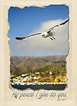 Inspirational photo of peaceful seagull flying near Catalina, CA