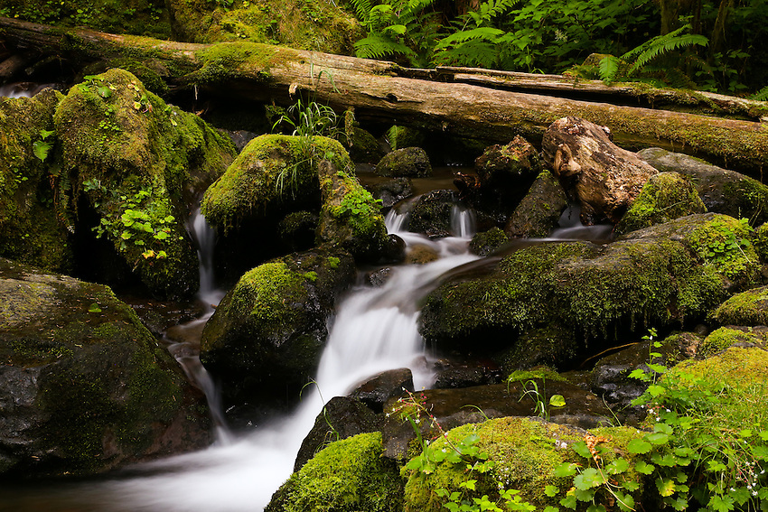 Lower Merriman Falls, Olympic NP, Wa