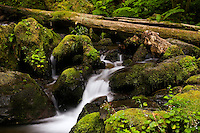 Lower Merriman Falls, Olympic NP, Wa