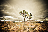 Stormy Day at Joshua Tree National Park - CA