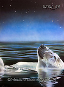 Sandi, REALISTIC ANIMALS, REALISTISCHE TIERE, ANIMALES REALISTICOS, paintings+++++,USSN66,#a#, EVERYDAY ,polar bears ,puzzles