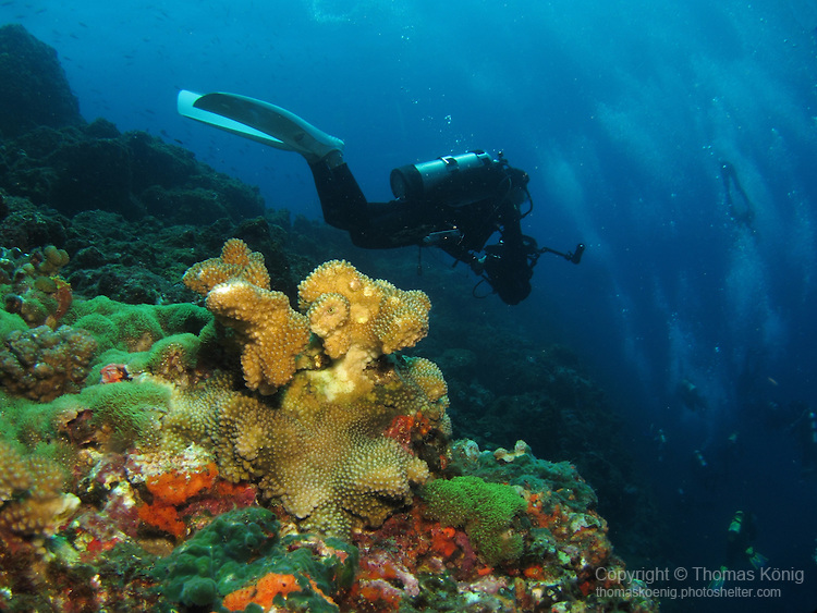 Seven-Star Rock, Taiwan -- Colorful coral on a sea mount, with divers headed for the abyss below.