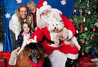 Pergo (a cotton) and Tuscan  (a chow mix) pose for a holiday photo with Santa and their Moms at Pet Pros in Redmond, WA to help raise money for Dogs Deserve Better on December 11, 2010. (photo by Karen Ducey)