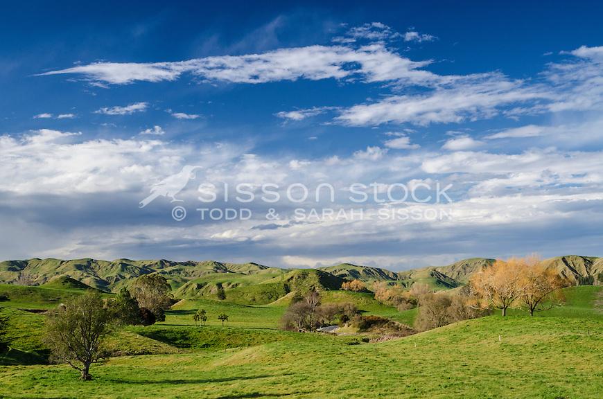 Green paddocks & foot hills between Napier and Gisborne.  North Island New Zealand.