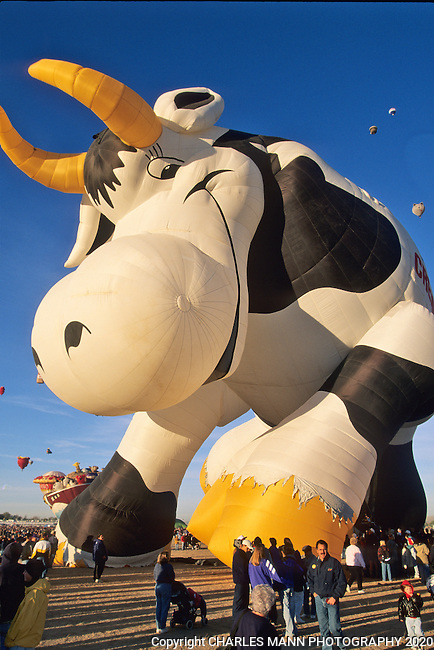 The Creamland Cow balloon is a perennial favorite at the Albuquerque International Hot Air Balloon Fiesta.