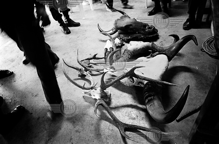 Illegal animal products including antlers and horns of different animals lie on the ground at a bar on the outskirts of Bangkok. The bar was raided by the Royal Thai Forestry Rangers after a tipoff. .