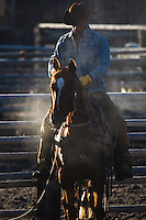 Cowboy in moring mist Western fine art prints and photographs of the western lifestyle by western photographer Jess Lee.