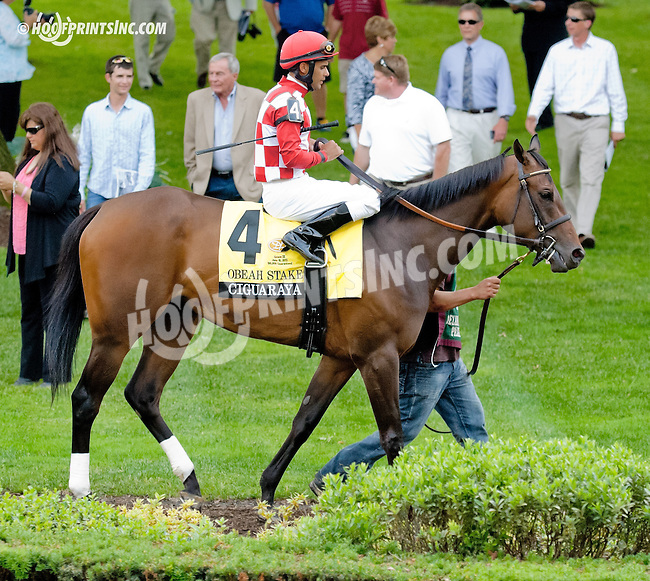 Ciguaraya before The Obeah Stakes (gr 3) at Delaware Park on 6/15/13