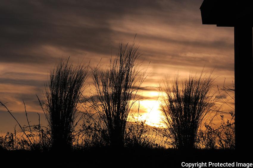 Sawgrass Sunset photographed at Arthur Marshall Loxahatchee Preserve in Boynton Beach, FLorida.