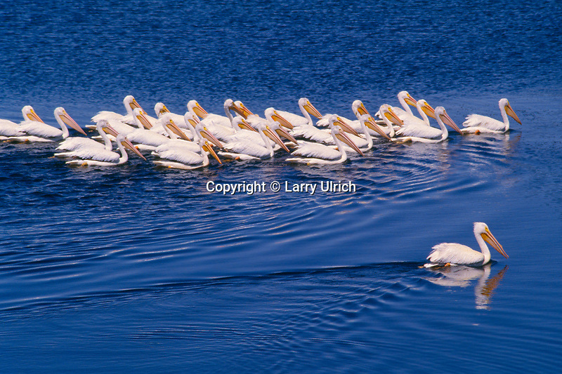 Click to view larger image<br />