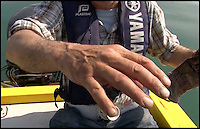 BNPS.co.uk (01202 558833)<br /> Pic: Graeme Pullen/BNPS<br /> <br /> ***Must use full byline***<br /> <br /> The line cut into Graeme's gloved hand.<br /> <br /> Never mind the pollocks...<br /> <br /> This is the jaws-dropping moment an angler fishing for pollock hooked a whopping 450lbs shark less than a mile from a holiday beach.<br /> <br /> Graeme Pullen was making the most of a large shoal of the small white fish close to the north Devon coast when the 8ft long shark took his bait.<br /> <br /> Graeme shouted to friend Wayne Comben 'never mind the pollocks' as his rod bent over double and he began an almighty 30 minute fight to reel in the monster catch in.