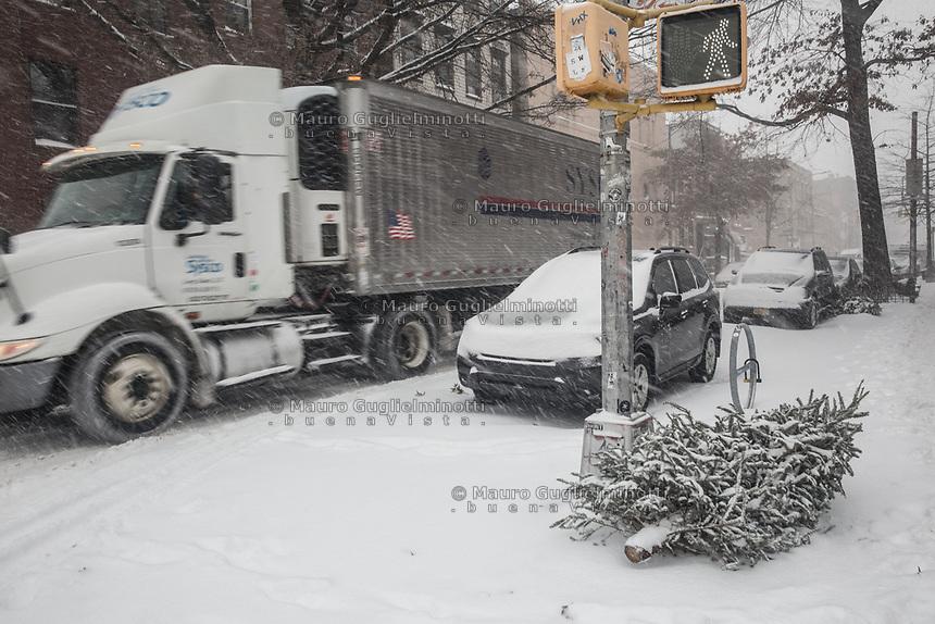 CHRISTMAS TREES AFTER CHRISTMAS