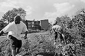 Detroit, Michigan<br /> USA<br /> July 25, 2010<br /> <br /> The Gateway Community Garden has been built and cultivated by Michigan prison inmates finishing their sentences at the Gateway halfway house on East Jefferson Avenue-a main artery in Detroit. They have created a small but vibrant inner-city garden. Using a vacant lot and recycled debris from a demolished house nearby, a dozen or more inmates are growing corn, tomatoes, peppers, watermelons, lettuce and squash.<br /> <br /> The men give away the fruits and vegetables to needy people and appreciate purposeful work to fill their final days of incarceration. Michigan prison inmate Harley Hubble, 50 is one of the principle players in making the garden a reality. He spent three of his 10 year sentence studying horticulture. He learned about crops, soil management, landscape design and greenhouses.<br /> <br /> Urban gardening has taken Detroit by storm with so many vacant lots available after thousands of homes have been foreclosed, abandoned and demolished many residents and neighborhoods have turned those plots in to productive land.