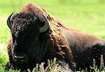 Earthly Companions Wildlife, Wild animals, birds, bears, wolf, chameleons, hawk, zebra, ram, tortoise, turtles, horseshoe crab, sea enmities, baby ducks, squirrels, lizards, frogs, fish, dear, snakes, sharks, Koi,  Alligators, gators, baby gators, cranes, sea life, mountain life, desert life, swamp life, etc.