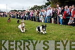 Crowds of spectators watch Smokey take 1st place ahead of Fluke in the terrier race final last Sunday at the Fenit SeaBreeze festival..