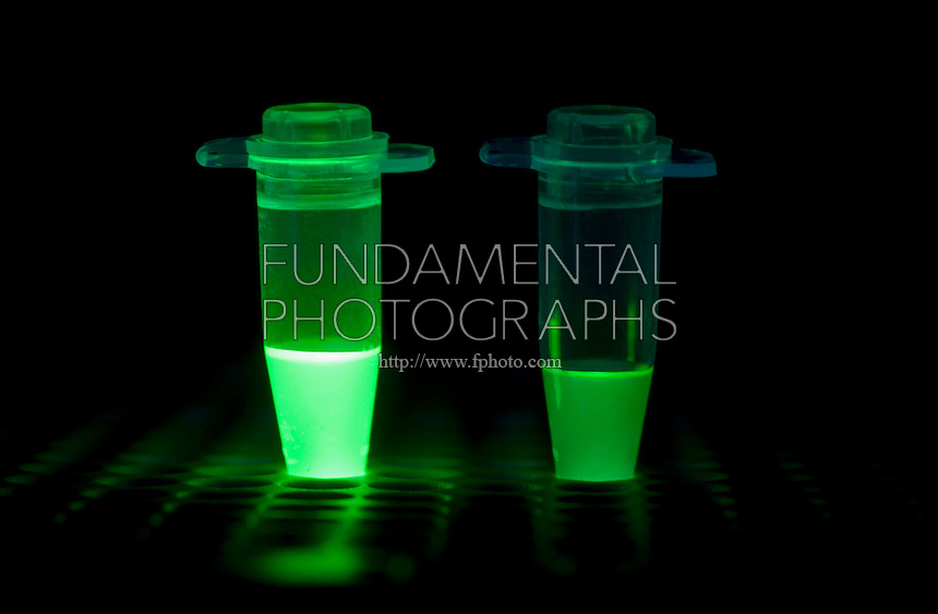 FLUORESCENT PCR TUBES<br /> Polymerase Chain Reaction<br /> In molecular biology, real-time polymerase chain reaction is a lab technique based on the PCR, which is used to amplify and quantify a targeted DNA molecule. One or more specific sequences in a DNA sample can be detected by real time PCR.