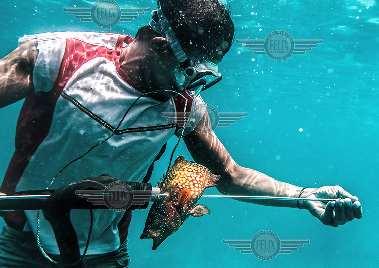 A Bajau man who goes by the name of Arack, prepares to remove a grouper from his spear after a successful dive near Malenge island, Indonesia. (Photo: Aurélie Marrier d'Unienville)