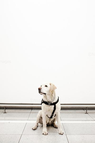 Warsaw 25.02.2014 Poland<br /> Okecie airport. The custom official retiring dog Carramba<br /> Photo: Adam Lach / Napo Umages<br /> <br /> Lotnisko Okecie. Odchodzacy na emeryture pies celnikow Karramba.<br /> Fot: Adam Lach / Napo Images