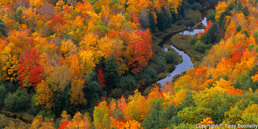 Porcupine Mountains Wilderness State Park, MI<br /> Forest canopy inthe fall colored hardwood forest near Lake of the Clouds - from the bluff on the Escarpment Trail