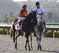 Executiveprivilege on the track for the Del Mar Debutante at Del Mar Race Course in Del Mar, California on September 1, 2012.
