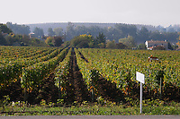 vineyard chateau la dauphine fronsac bordeaux france