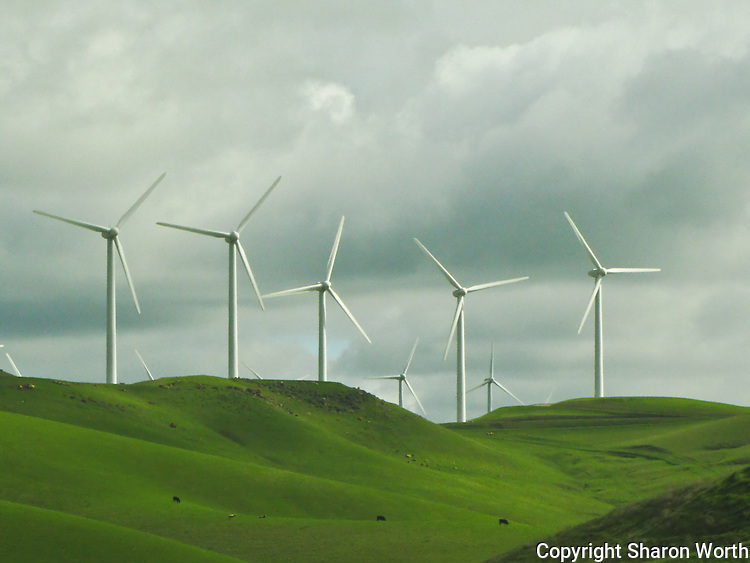 Giant windmills rise from the fields east of Mount Diablo, turning cows and sheep grazing below into little more than dots on the hillside.