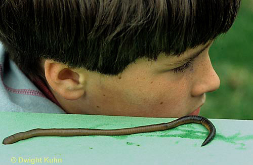1Y07-023x  Earthworm - experiment with boy listening to movement of nightcrawler - Lumbricus terrestris