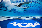 GREENSBORO, NC - MARCH 16: A general view of the start of heat two of the Men's 800 Yard Freestyle Relay during the Division II Men's and Women's Swimming & Diving Championship held at the Greensboro Aquatic Center on March 16, 2018 in Greensboro, North Carolina. (Photo by Mike Comer/NCAA Photos/NCAA Photos via Getty Images)