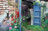 Blue doors, walled secret garden, red hibiscus, rustic brick walls, overgrown plants