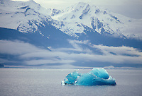 Crystal blue iceberg with gull, floating in Endicott Arm with snowy mountains of Tracy Arm Fords Terror Wildnerness in background, Tongass National Forest, Alaska, AGPix_0680.