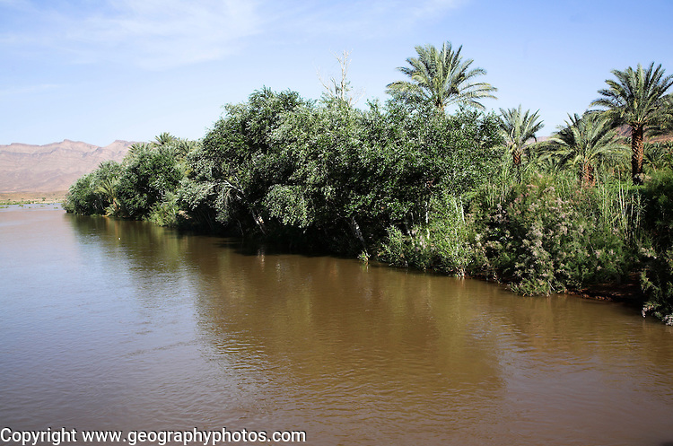 Fertile valley land date palms and farmland, River Draa valley, Morocco, north Africa