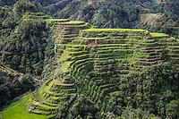 The Banaue Rice Terraces are a great example of a living cultural landscape that can be traced as far back as two millennia ago in pre-colonial Philippines. They are the result of efforts of the Ifugao minority community that has occupied these mountains for thousands of years and passed on their skills from generation to generation. The Banaue Ifugao Rice Terraces represent an enduring illustration of an ancient civilization that has survived despite modernization. The rice terraces of the Ifugao have been built to follow the contours of the mountains. The knowledge handed down from one generation of Ifugao to the next, sacred traditions, and a delicate social balance have created this beautiful landscape that expresses the harmony between humans and the environment.