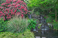 ORPTC_D200 -USA, Oregon, Portland, Crystal Springs Rhododendron Garden, Light red blossoms of rhododendrons in bloom alongside lush vegetation and waterfall.