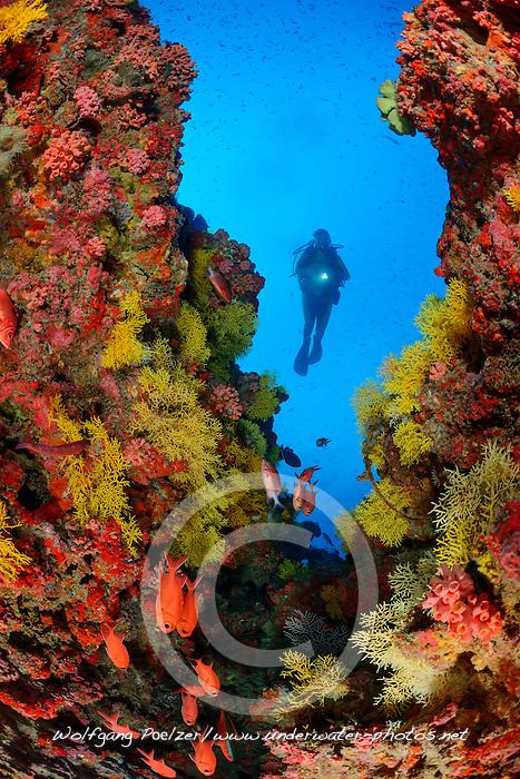 Korallenriff mit Weichkorallen und Taucher,  Coralreef with soft coral and scuba diver, Baa Atoll, Malediven, Indischer Ozean, Baa Atoll, Maldives, Indian Ocean