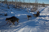 Ashley Guernsey on the trail of the 2014 Jr. Iditarod Sled Dog Race at Happy Trails Kennel, Big Lake, Alaska<br /> Sunday February 23, 2014 <br /> <br /> Junior Iditarod Sled Dog Race 2014<br /> PHOTO BY JEFF SCHULTZ/IDITARODPHOTOS.COM  USE ONLY WITH PERMISSION