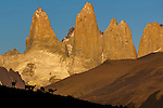 Guanacos, Torres del Paine National Park, Chile