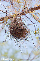 0703-1101  Verdin (Titmouse, Penduline Tit), Bag Nest (Hanging Nest or Dome Nest), Auriparus flaviceps  © David Kuhn/Dwight Kuhn Photography