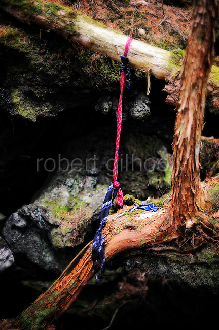 A noose made from neckties hangs from the branch of  a tree in Aokigahara Jukai, better known as the Mt. Fuji suicide forest, which is located at the base of Japan's famed mountain west of Tokyo, Japan. PHOTOGRAPHER: ROB GILHOOLY