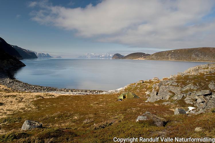 Teltleir i fjæra på Seiland. Sørøya skimtes i bakgrunnen. ----- Camp on island Seiland. Sørøya in the far background.